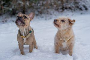 Hanfleinen und Hanfhalsbänder für Hunde